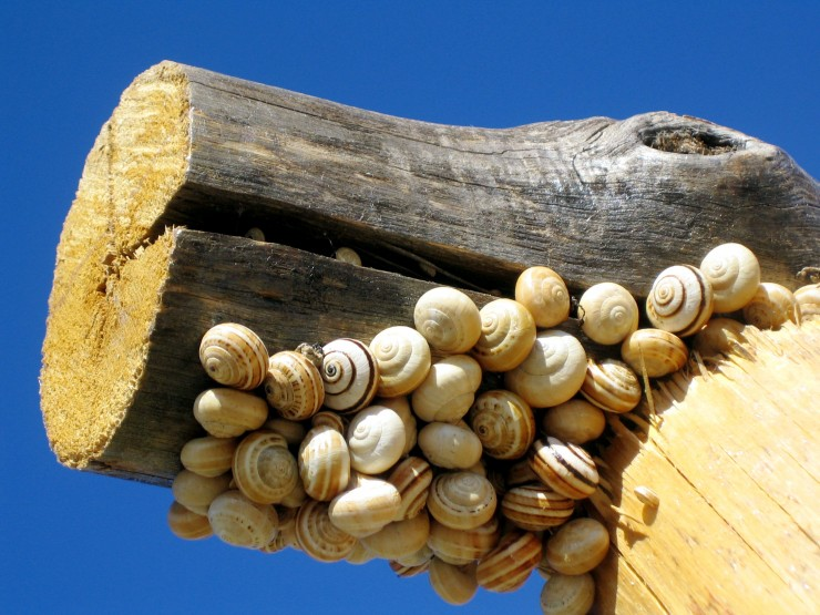 Snails on a Fence Post - Andalucia, Spain