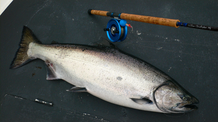 First salmon (40lb Chinook) on a brand new custom rod set up with an Islander MR3 reel.